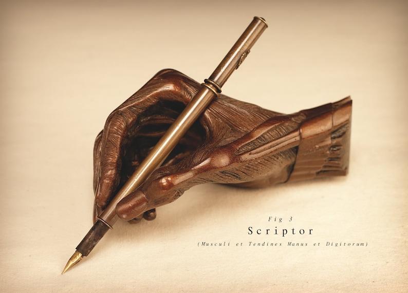 Scriptor Musculi et Tendines Manus et Digitorum image 0