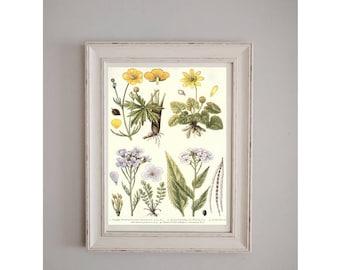 1919 Meadow Flowers Botanical Poster // Nature Journal // Wall Art