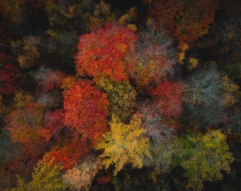 Autumn from above, fall, trees, aerial photography, landscape