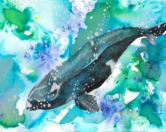 Minke Whale Print