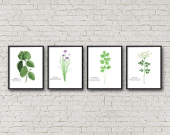 FRAMED Botanical Herb Watercolor Paintings, Herb Names, Botanical Prints, Kitchen Art, Herb Painting, Botanical Art, Gardener Gift, Herb Art