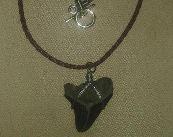 Megalodon Necklace