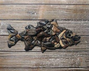Shark Tooth Fish