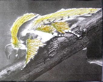 Entomojoly - papillon, entomologie, insecte brodé, piqué libre, cabinet de curiosités, illustration brodée, décoration