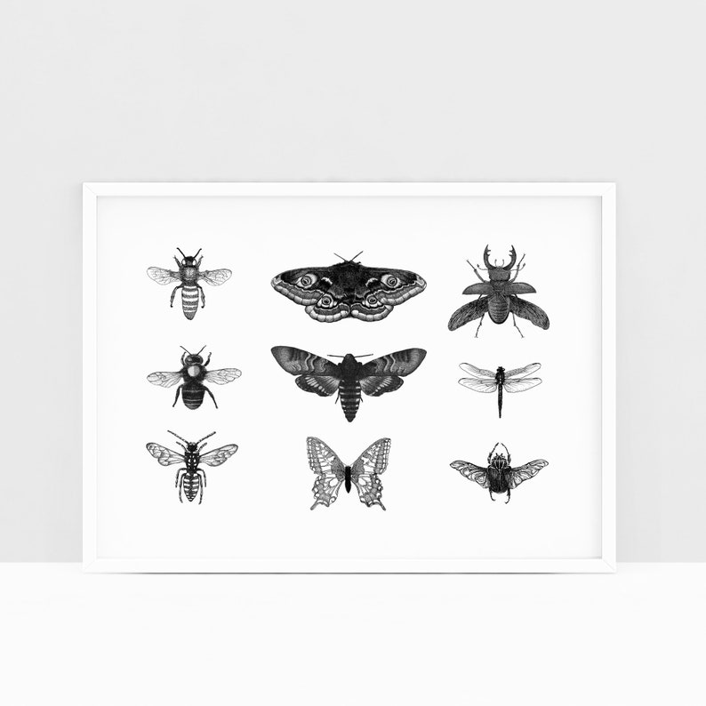 Insect art print  Dotwork stipple illustration of Insects  image 0