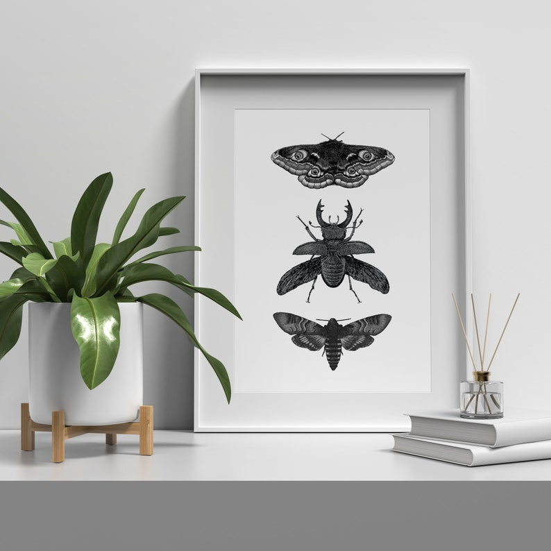 Dotwork art print of moths and beetle  Hand drawn black and image 0