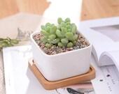 Medium Ceramic Succulent Pot, Ceramic Planter Set, Cactus Planter Container, Square Pot, Bamboo Tray, Plants Not Included, 1, Set of 2 or 3