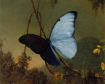 Blue Morpho Butterfly -Martin Johnson Oil Painting Museum Quality Reproduction