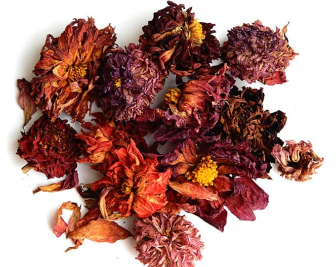 Dahlia dried flowers