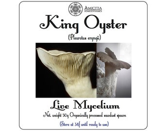 King Oyster | Mushroom grow kit with Amicitia Support | Mycelium | DIY Kit | Permaculture | Mushroom spawn | Mushroom kit | Mushroom patch