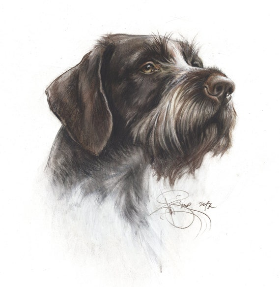 "/""Sunday Driver/"" A Limited Edition German Wirehaired Pointer Print"
