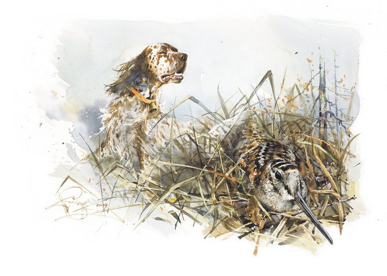 English setter. On woodcock watercolor signed print image 0