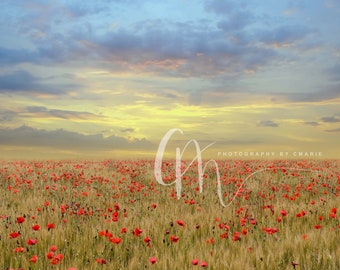 Flower field digital background
