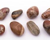 Pebbles petrified wood - Size: 3.8 - 4.6 cm - 309 gramos.