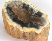 Permian petrified wood trunk from Paraguay - 22 x 14 x 13.5 cm - Weight: 5 kg.