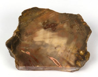 Small slice of a fossilised wood from Paraguay - 9 x 7.4 x 2.3 cm - Weight: 246 grams.