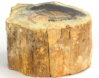Permian petrified wood trunk from Paraguay - 18 x 14 x 12.5 cm - Weight: 5.5 kg.