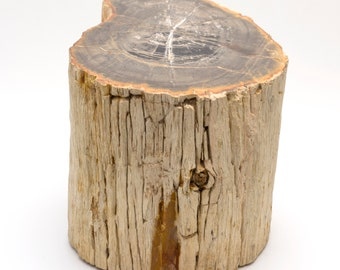 Permian petrified wood trunk from Paraguay - 19 x 19 x 20 cm - Weight: 14.4 kg.