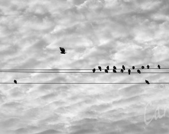 Suspended / black and white photograph, fine art, wall art print, b&w photography, bird wall decor, animal photograph, birds on a wire,