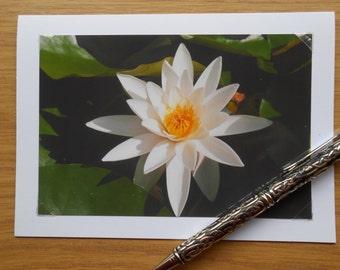 Photo Card, Photo Greeting Card, Lily Photo Card, White Flower Card, Photo Note Cards, Lily Note Card, Greeting Cards, Note Cards