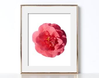 Big Flower Pink Carnation Digital Download Printable Art Flower Art Chill Vibes Pretty Floral Wall Art Bedroom Decor Girls Room Decor Dorm