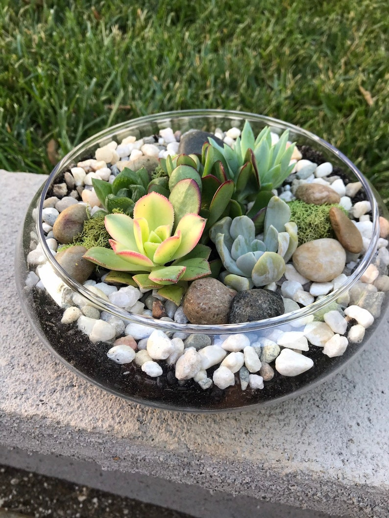 Glass Terrarium Bowl With Succulents Kit To Make Terrarium Etsy