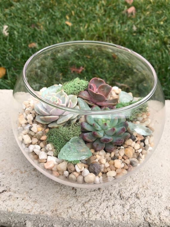 Small Glass Terrarium With Succulents Kit To Make Terrarium Etsy