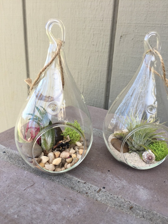 Mini Hanging Glass Terrarium With Air Plants Kit To Make Etsy