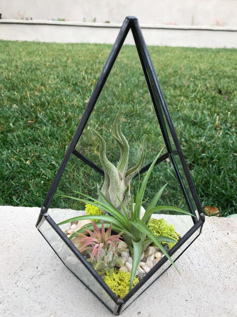 Glass Geometric Diamond Terrarium With Air Plants Kit To Make Etsy