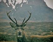 Glencoe Scotland, Stag Print, Stag Photo, Stag Wall Art, Stag Photography, Wildlife Wall Art, Scottish Highlands, Wildlife Print, Stag Art