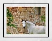 White Horse Print, White Horse Picture, White Horse Wall Art, Gift For Horse Lover, Horse Gift, Horse Decor, Horse Wall Art, Horse Print