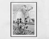 Falkirk Kelpies Scottish Thistle Black And White Print