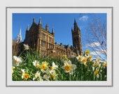 Glasgow University Photography Print, Glasgow University Picture, Daffodil Print, Spring Photography, Glasgow Poster, Glasgow Gift, Wall Art