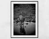 Stag Print, Stag Photography Print, Stag Wall Art, Glencoe Scotland, Wildlife Photography, Stag Gift, Wildlife Photo, Wildlife Print, Decor