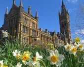Daffodils Glasgow University Print, Glasgow University Photo, Glasgow University Wall Art, Glasgow University Picture, Daffodils Print,