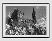 Glasgow University Photography Print, Glasgow University Picture, Glasgow Poster, Daffodil Print, Spring Photography, Glasgow Gift, Wall Art