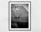 Stag Photography Print, Glencoe Scotland, Wildlife Photography, Stag Print, Stag Wall Art, Wildlife Photo, Wildlife Print, Stag Gift, Decor
