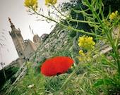 Marseille Notre Dame de la Garde  Flower Photography Print Poster