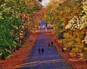 Queen's Park Glasgow, Glasgow South Side, Glasgow Gift, Glasgow in Autumn Picture, Glasgow Photography, Autumn Photography, Park In Autumn
