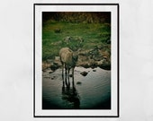 Stag Print, Stag Photography Print, Glencoe Scotland, Stag Wall Art, Wildlife Photography, Stag Gift, Wildlife Photo, Wildlife Print, Decor
