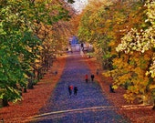 Queen's Park Glasgow Print, Autumn in Glasgow, Glasgow Scotland, Glasgow Wall Art, Glasgow Photography, Glasgow Gift, Glasgow South Side
