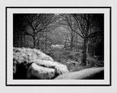 White Horse Photography, Knoydart Scotland Photography Print, White Horse Poster, Mystical Print, Nature Photography, Horse Wall Art, Decor