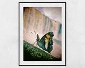 Butterfly Print, Nature Photography, Iguazu Falls Photography Print, Butterfly Photography, Waterfall Photography, Waterfall Print, Wall Art