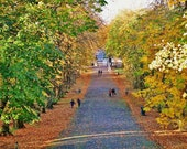 Glasgow South Side, Queen's Park Glasgow, Glasgow in Autumn Picture, Glasgow Photography, Glasgow Gift, Autumn Photography, Park In Autumn