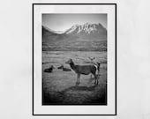 Deer Poster, Wildlife Photography, Deer Decor, Glencoe Scotland, Wildlife Print, Landscape Photography, Scotland Photography, Home Decor