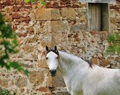 White Horse Photography Print In Loubressac France