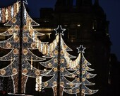 Glasgow George Square Christmas Trees Photography Print
