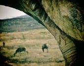 Glencoe Scotland Print, Wildlife Print, Wildlife Photo, Wildlife Wall Art, Wildlife Photography, Wildlife Wall Decor, Wildlife Poster, Deer