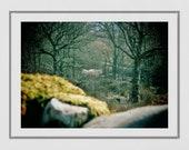 White Horse Photography, Knoydart Scotland Photography Print, White Horse Poster, Horse Wall Art, Mystical Print, Nature Photography, Decor