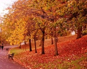 Kelvingrove Park Glasgow Photo, Kelvingrove Park Print, Autumn Photography, Glasgow Photography, Fall Photography, Autumn Decor, Fall Decor